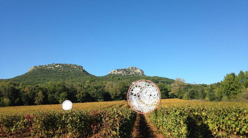 Vignes Réboussières 2016